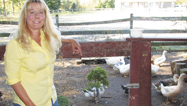 Lisa Steele shows off the chicken and duck coop on her small Gardner Lane farm. She has written a book for people who are looking for advice caring for their own chickens.