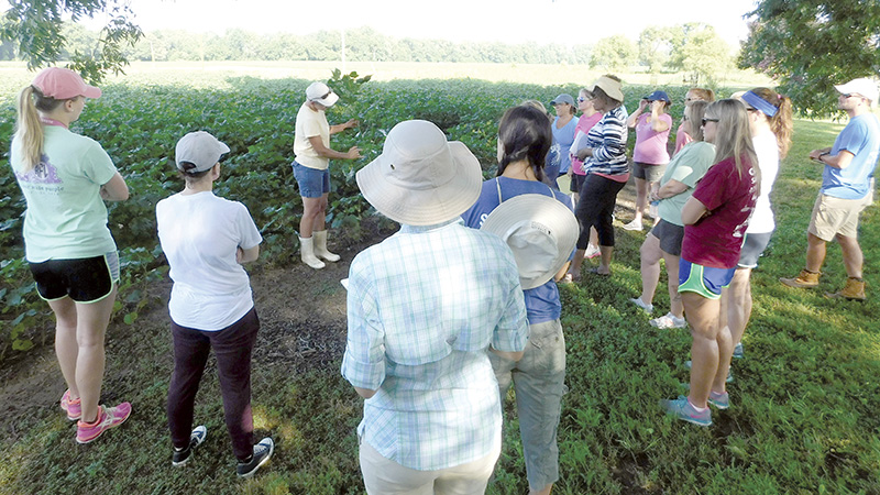 Shelley Barlow, owner of Cotton Plains Farm in Chuckatuck, shows one of her cotton plants to teachers participating in the Chesapeake Bay Foundation's agriculture program.
